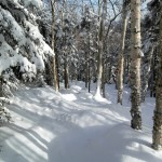 Random image: Powder in the Trees at Cannon
