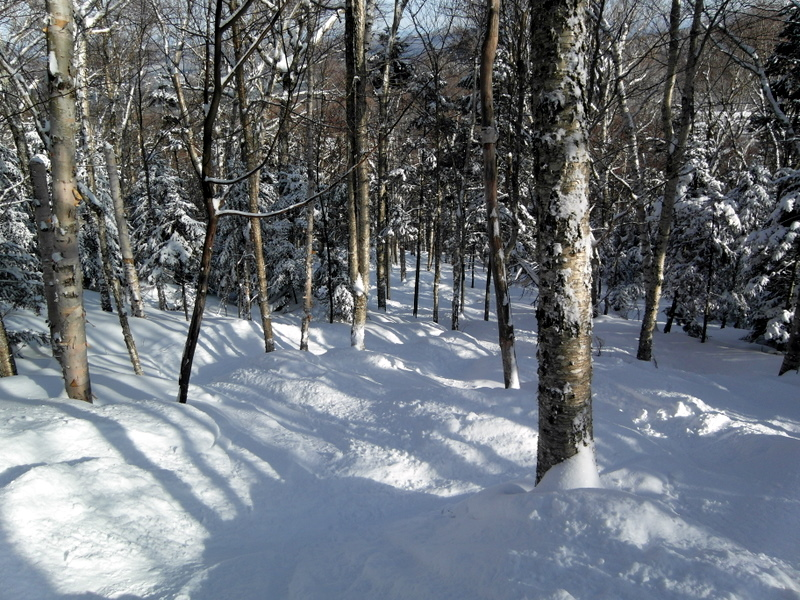 Powder in the Trees at Cannon