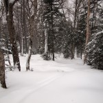 Untracked Woods at 2:00 P.M.